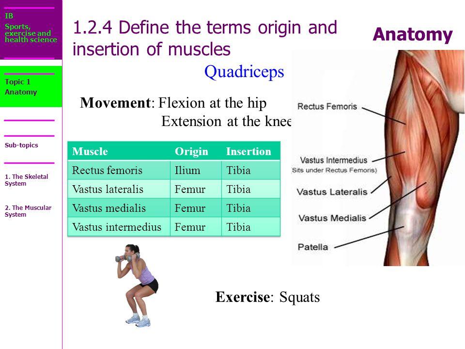 Origin definition anatomy