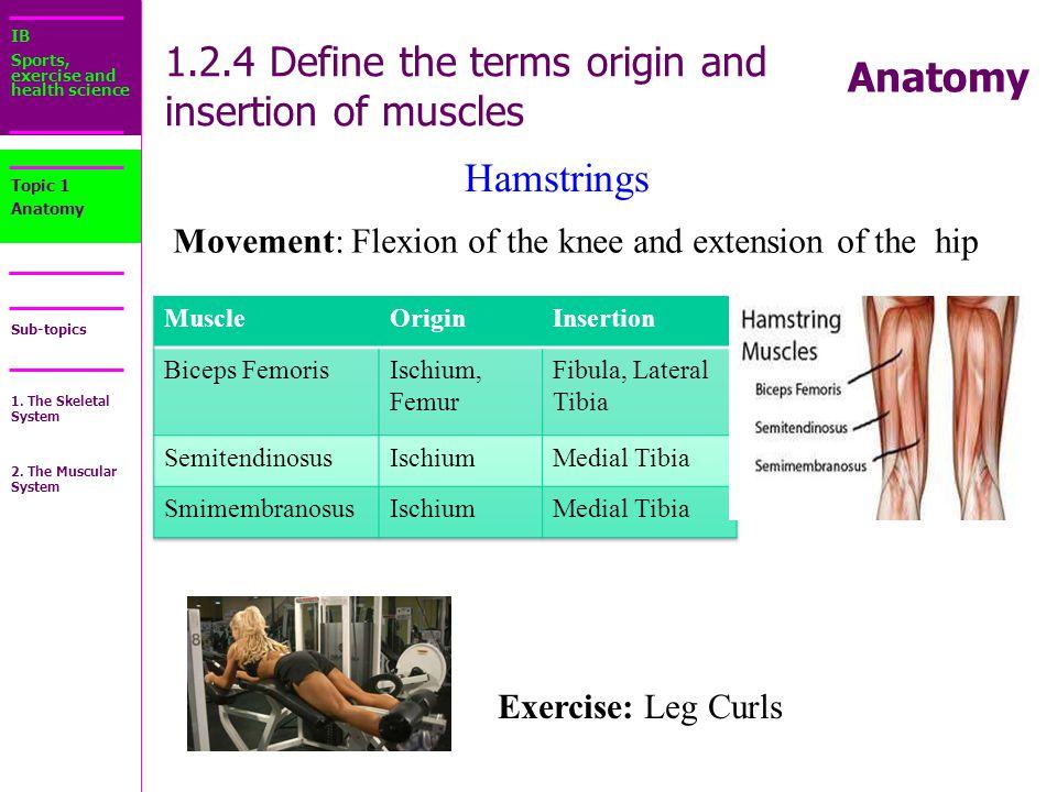 Insertion Anatomy Definition