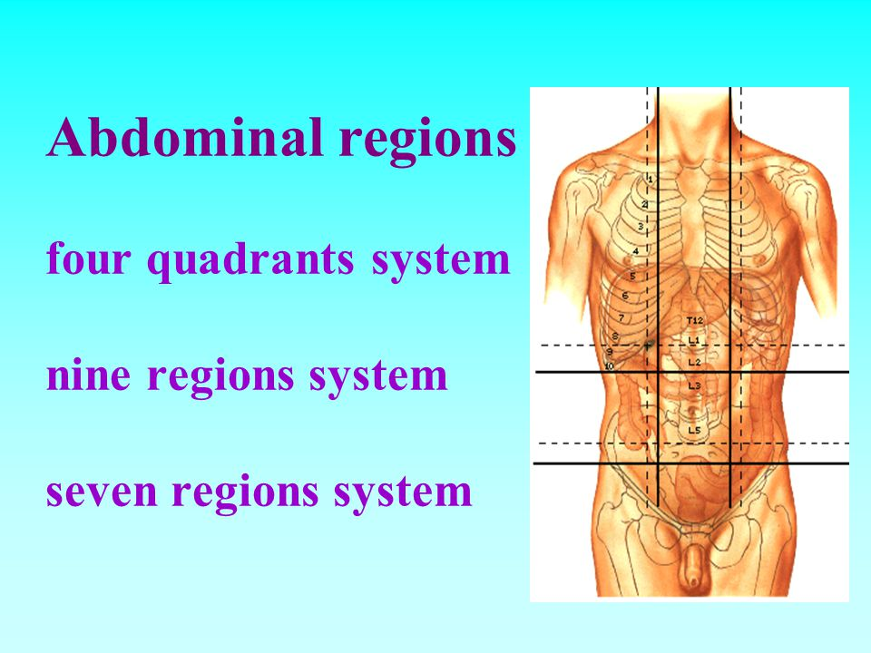 9 regions of abdomen The human abdomen is divided into regions by anatomists and physicians for purposes of study, diagnosis, and therapy in the four-region scheme, four quadrants allow localisation of pain and tenderness, scars, lumps, and other items of interest, narrowing in on which organs and tissues may be involved.