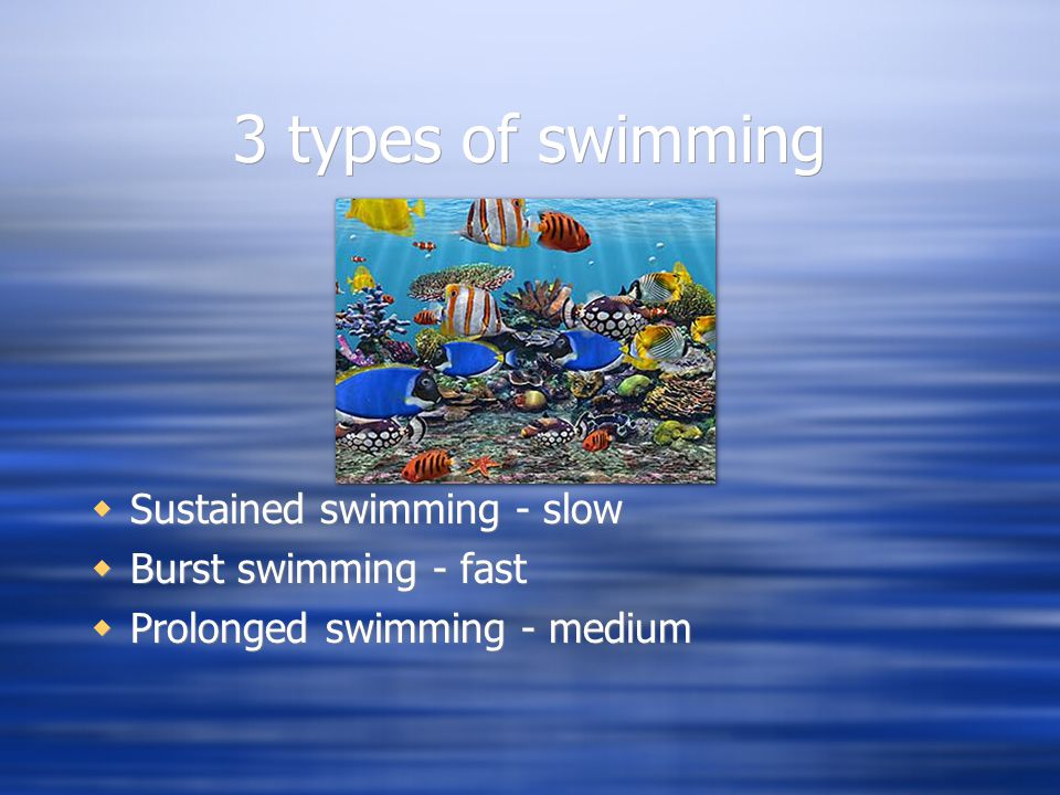 Fish locomotion ppt video online download for What is the fastest swimming fish