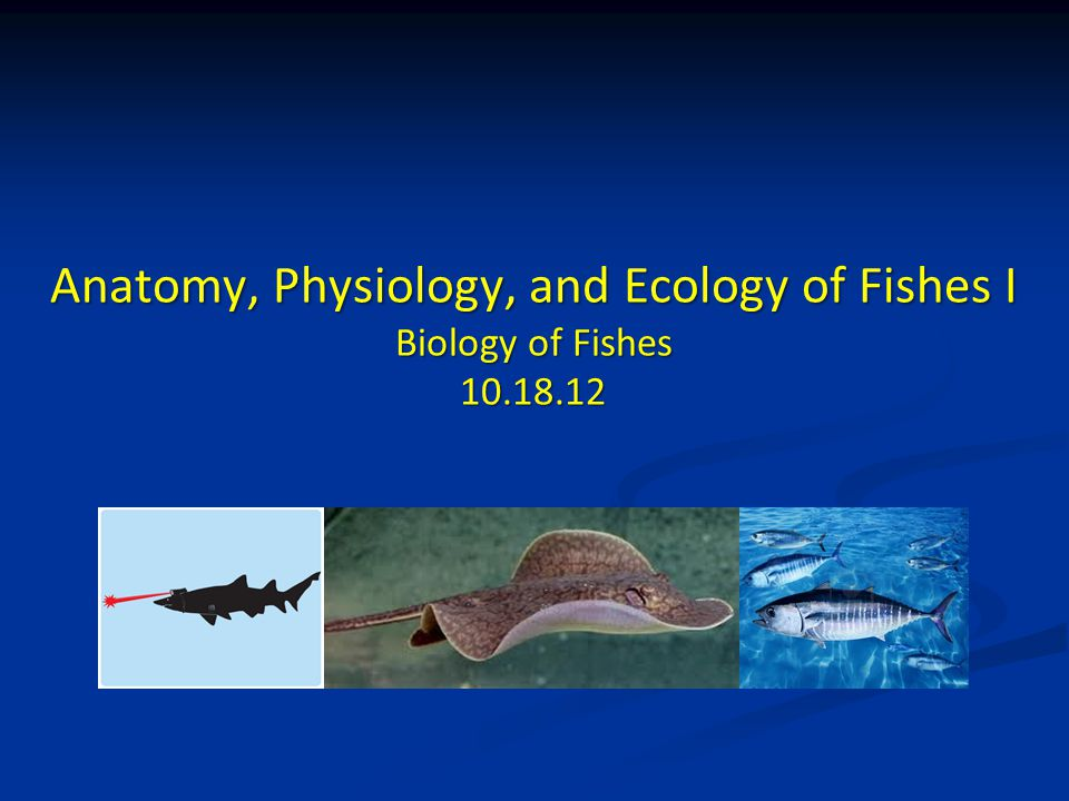 Anatomy, Physiology, and Ecology of Fishes I Biology of Fishes - ppt ...