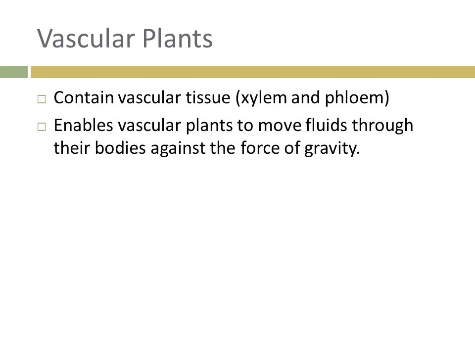 Vascular Plants Contain vascular tissue (xylem and phloem)