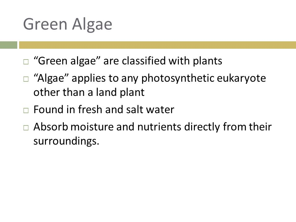 Green Algae Green algae are classified with plants