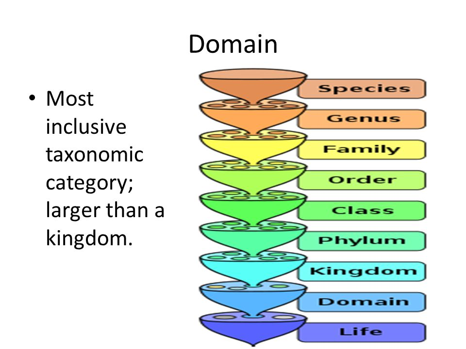 Domain Most inclusive taxonomic category; larger than a kingdom.