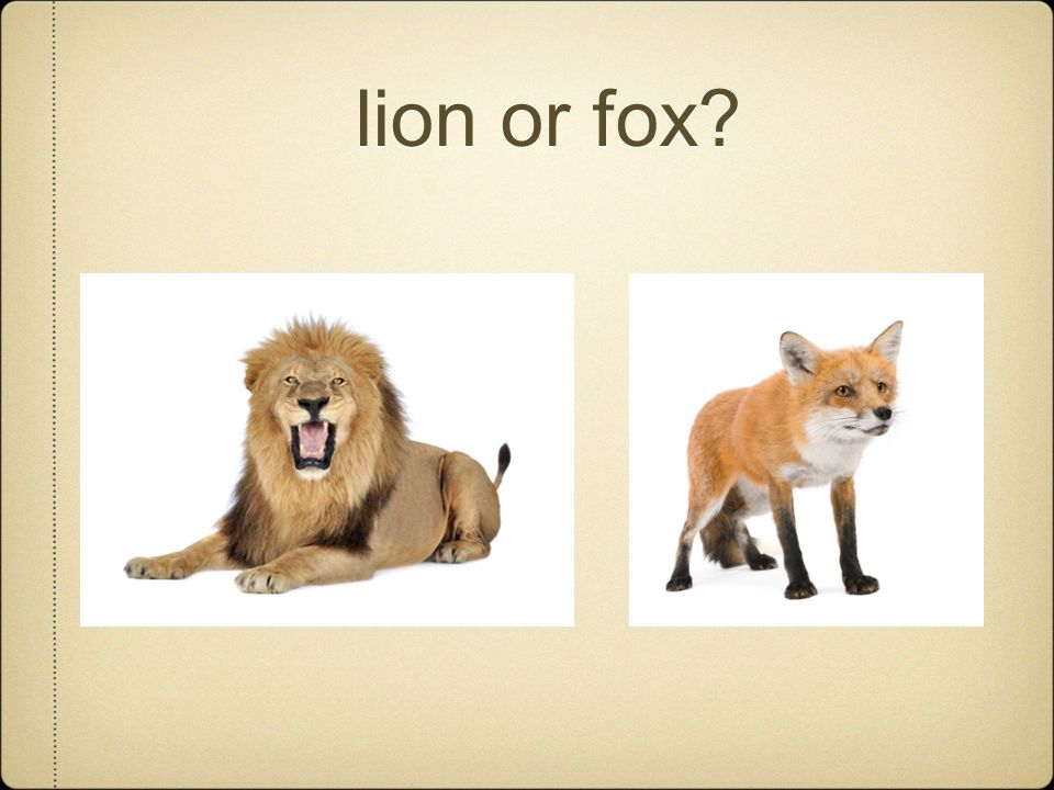 lion or fox