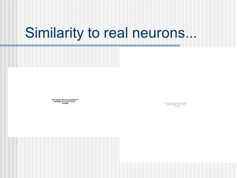 Similarity to real neurons...