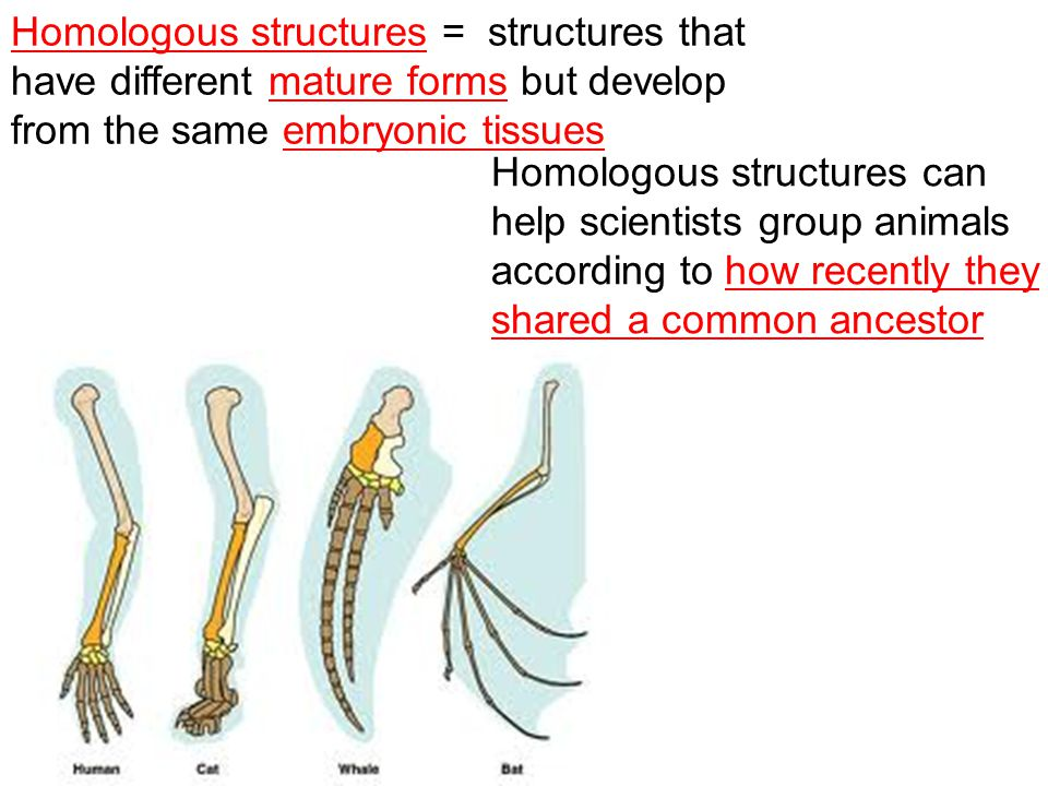 Structures That Have Different Mature Forms