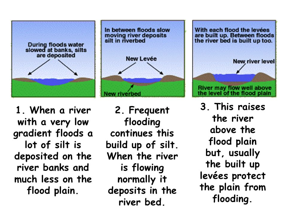 1. When a river with a very low gradient floods a lot of silt is deposited on the river banks and much less on the flood plain.