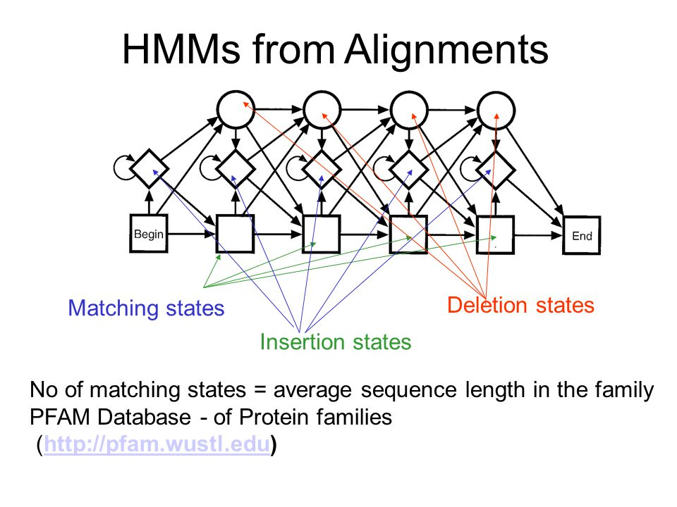 HMMs from Alignments Deletion states Matching states Insertion states