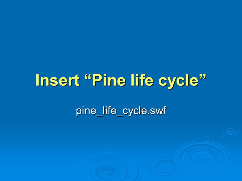Insert Pine life cycle