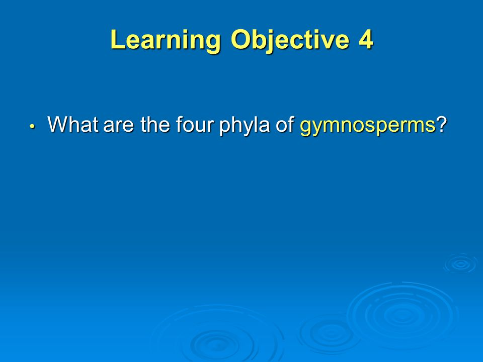 Learning Objective 4 What are the four phyla of gymnosperms