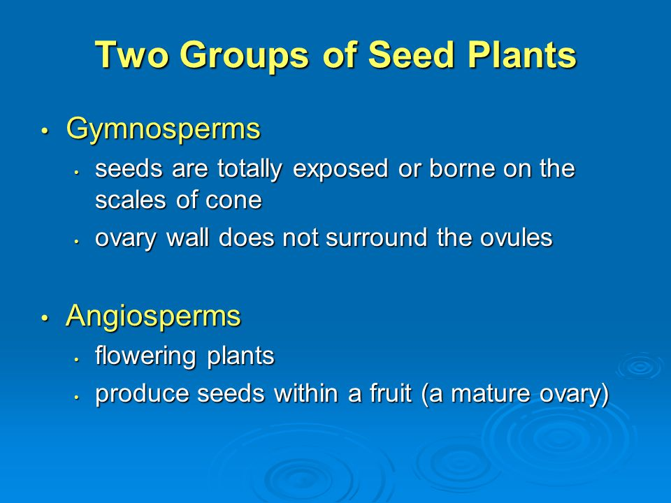 Two Groups of Seed Plants
