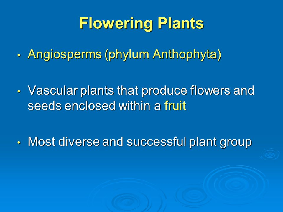 Flowering Plants Angiosperms (phylum Anthophyta)