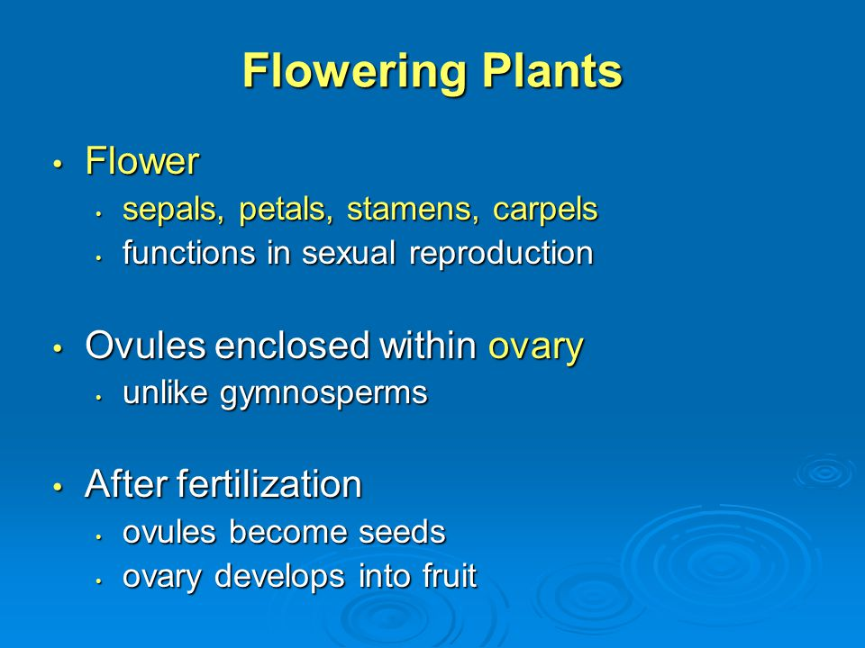 Flowering Plants Flower Ovules enclosed within ovary