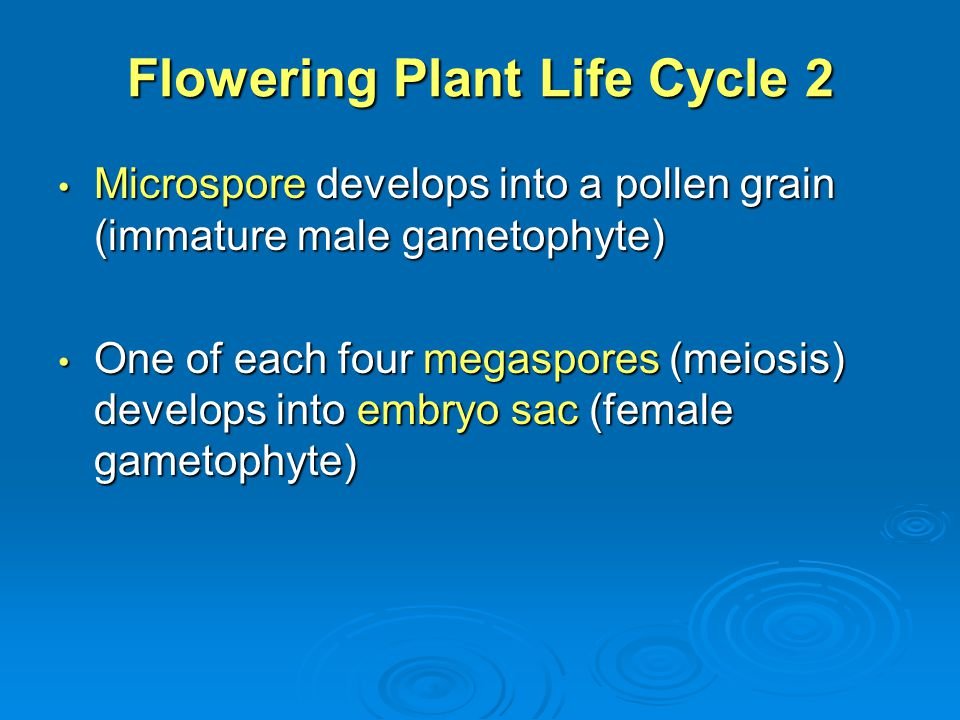 Flowering Plant Life Cycle 2