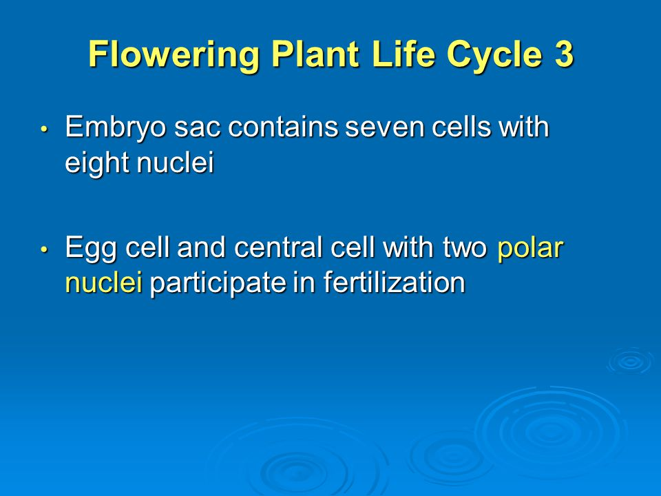 Flowering Plant Life Cycle 3