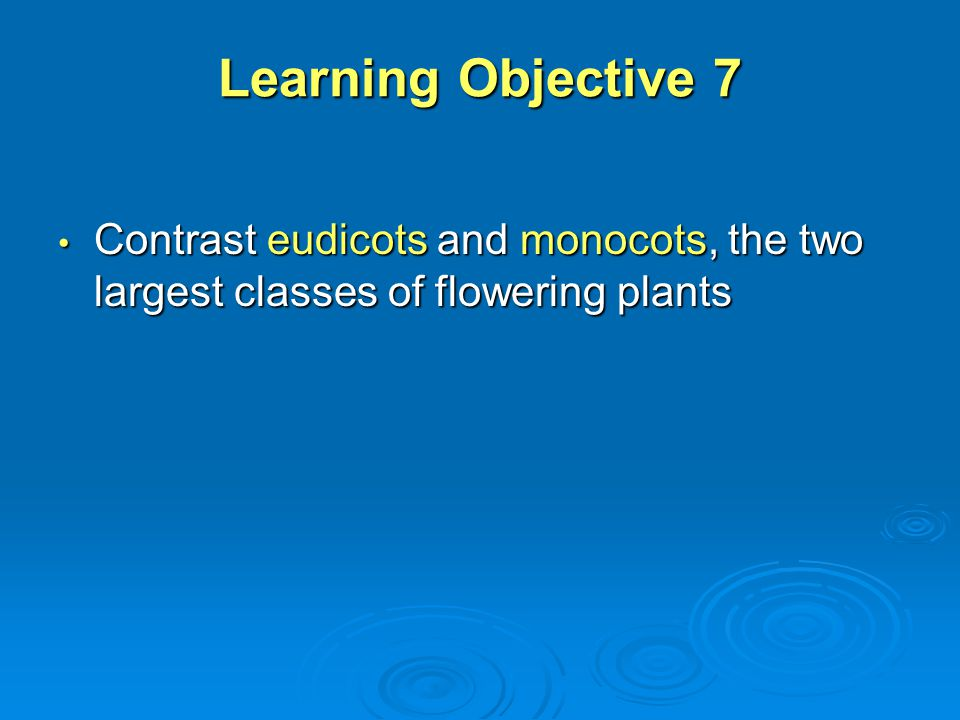Learning Objective 7 Contrast eudicots and monocots, the two largest classes of flowering plants