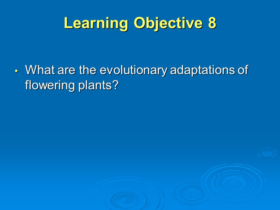 Learning Objective 8 What are the evolutionary adaptations of flowering plants