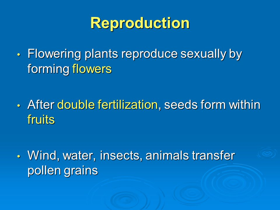Reproduction Flowering plants reproduce sexually by forming flowers