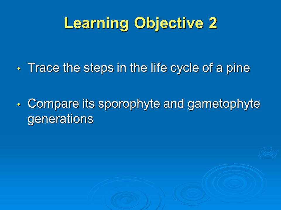 Learning Objective 2 Trace the steps in the life cycle of a pine