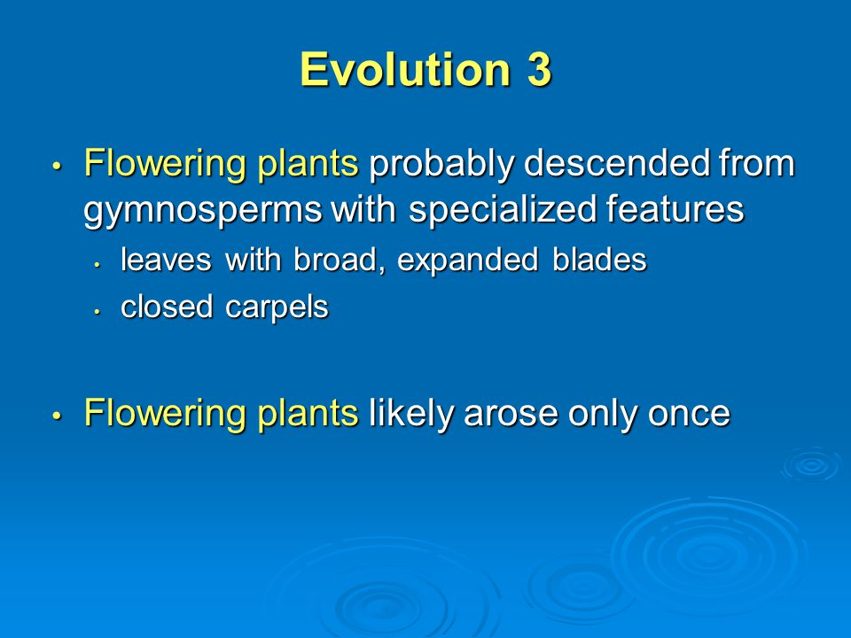 Evolution 3 Flowering plants probably descended from gymnosperms with specialized features. leaves with broad, expanded blades.