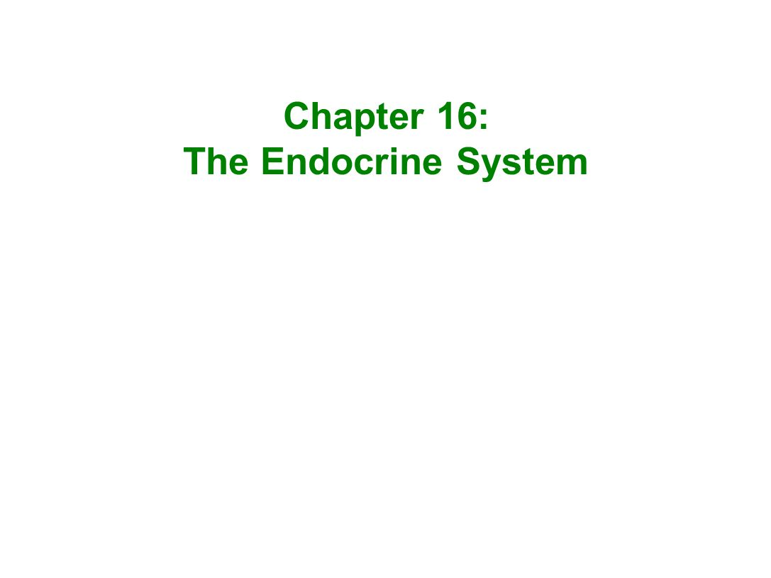Chapter 16: The Endocrine System. - ppt video online download