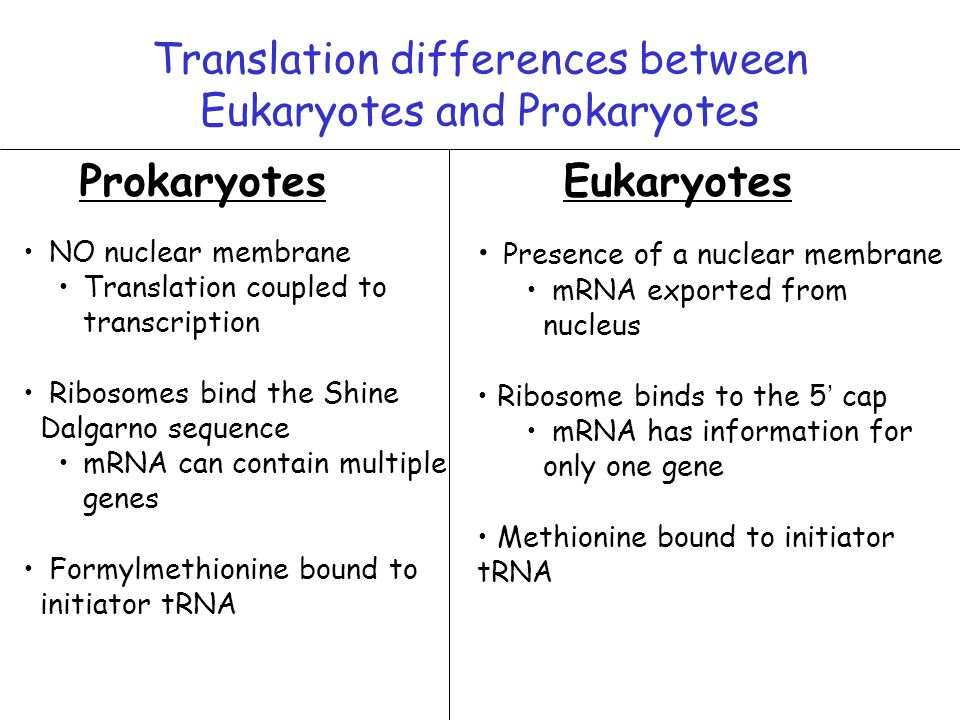 describe the differences between prokaryotic and Prokaryotic and eukaryotic cells are different in many aspects like prokaryotic  cells do not have defined nucleus whereas eukaryotic cells have.