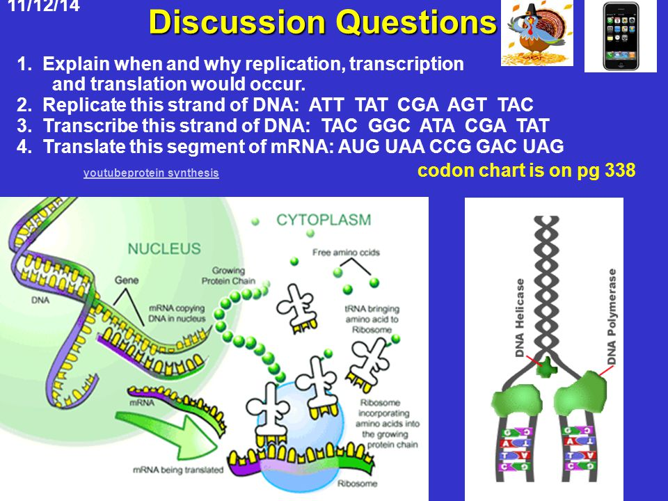 Discussion Questions Youprotein Synthesis Codon Chart Is On Pg 338