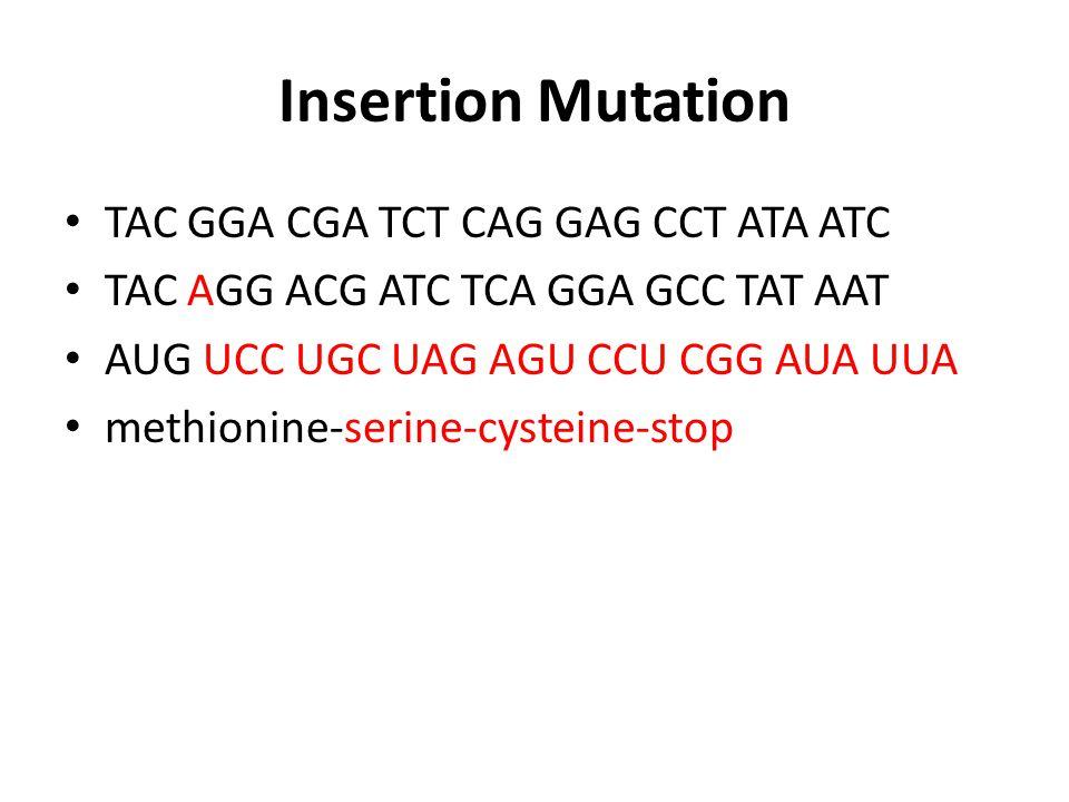 Gene Mutations Worksheet Ppt Download