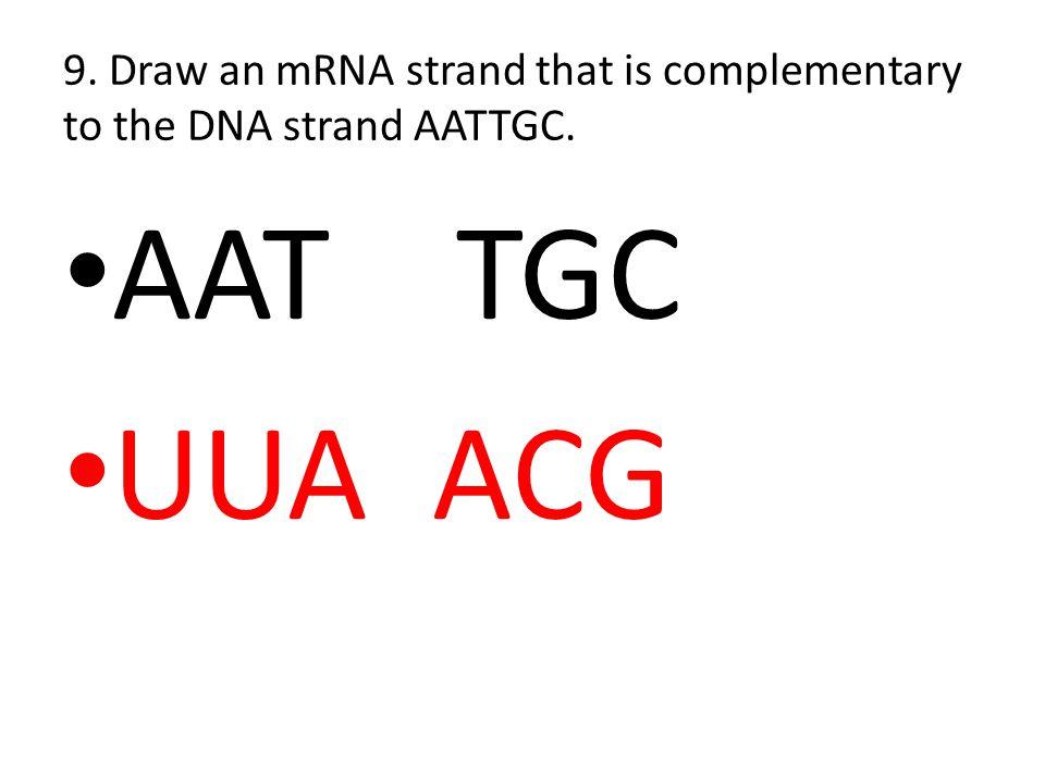 rna transcription worksheet