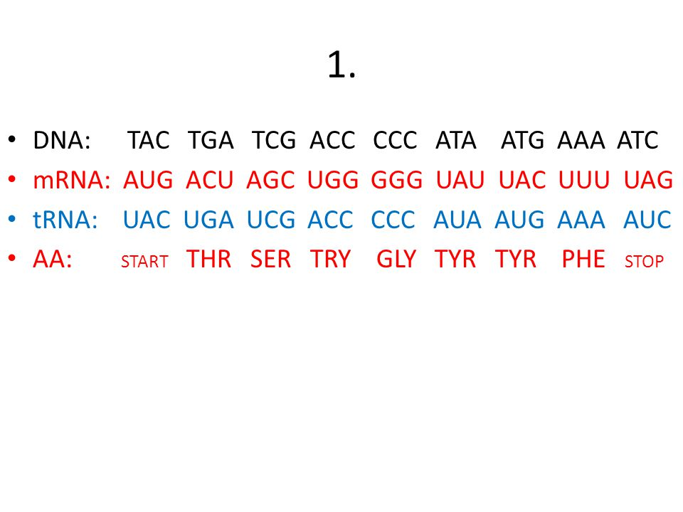 Collection of Dna Replication Transcription And Translation – Transcription and Translation Worksheet Key