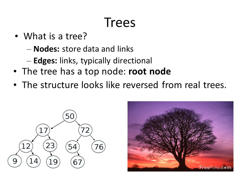 Trees • What is a tree • The tree has a top node: root node
