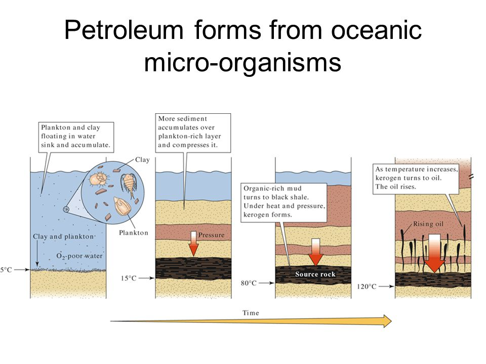 Petroleum forms from oceanic micro-organisms