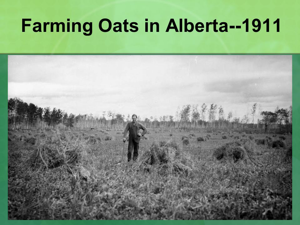 Farming Oats in Alberta--1911
