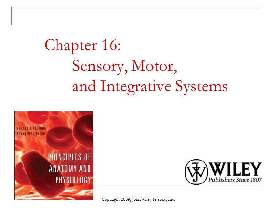 Chapter 16: Sensory, Motor, and Integrative Systems - ppt video ...