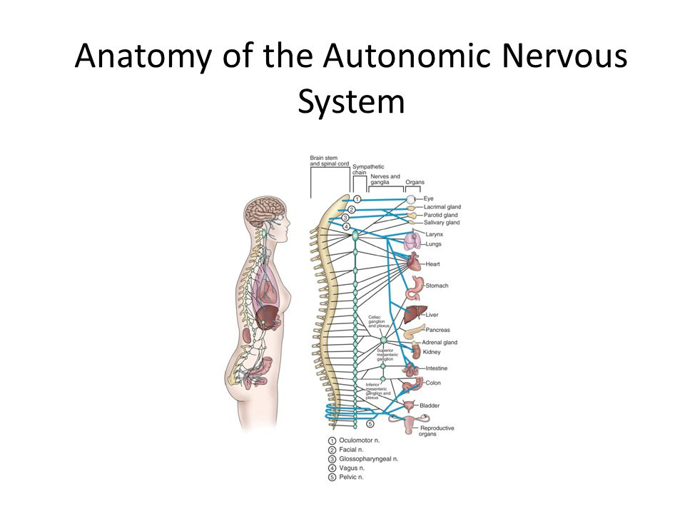 evaluation of nervous systems involvement to homeostatic function 170998 - peroxisome proliferator-activated receptor-alpha ppara - peroxisome proliferator-activated receptor ppar - hyperapobetalipoproteinemia, susceptibility to.