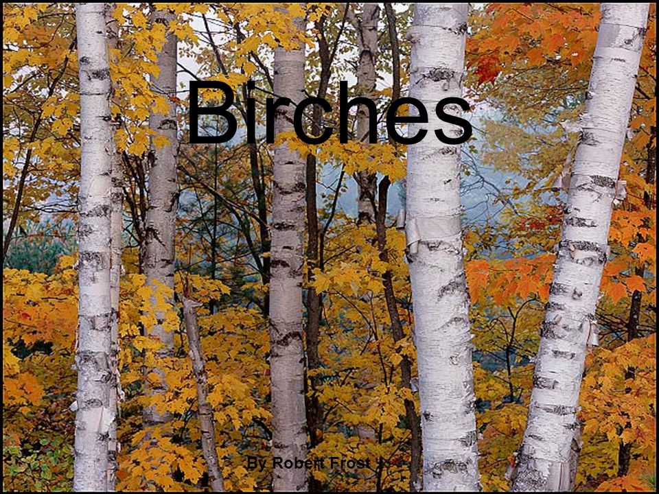 essay on birches by robert frost Birches by robert frost when i see birches bend to left and right across the lines of straighter darker trees, i like to think some boy's been swinging.