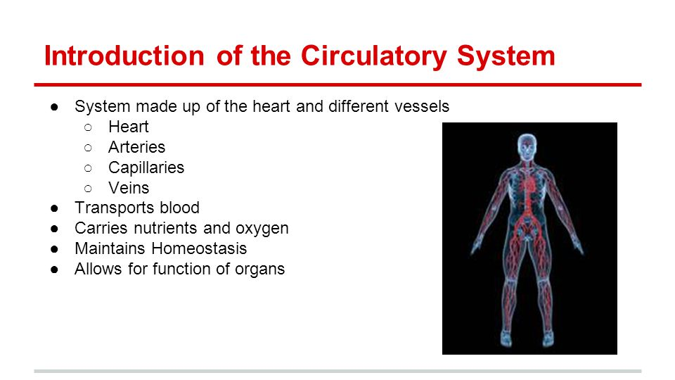 Introduction Of The Circulatory System