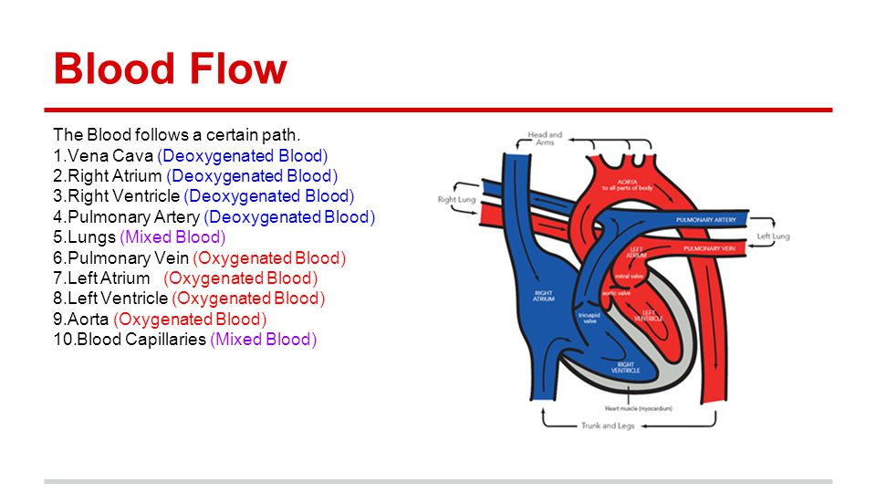 Where does Deoxygenated blood flow - answers.com