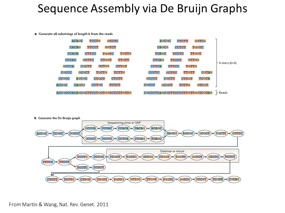 assembly sequence generation thesis Bayesian assembly of reads from high throughput sequencing thesis defense generate each child sequence from the sequence of its parent.