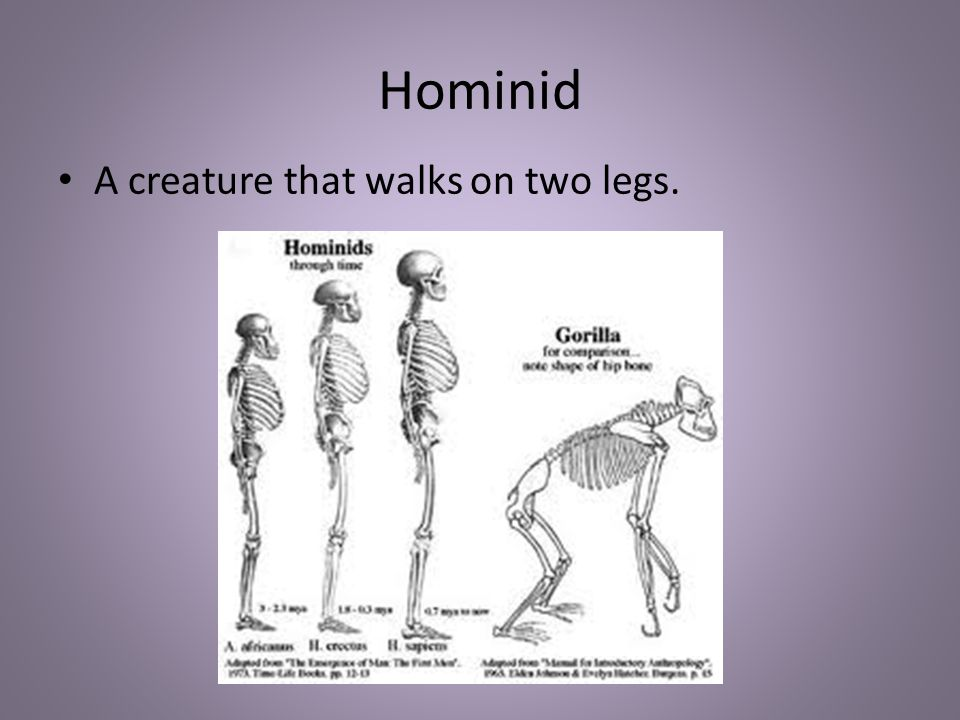 Hominid A creature that walks on two legs.