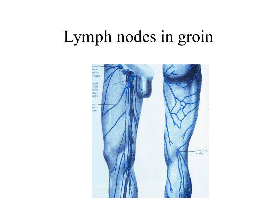 where are the lymph nodes groin molecular medicine