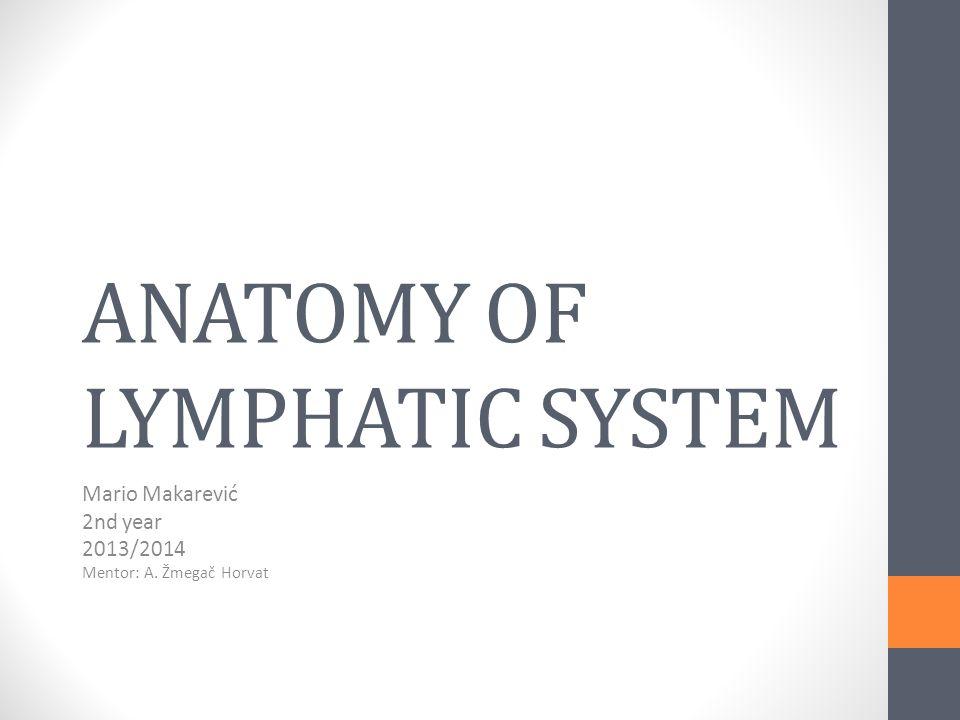 Lymph system anatomy