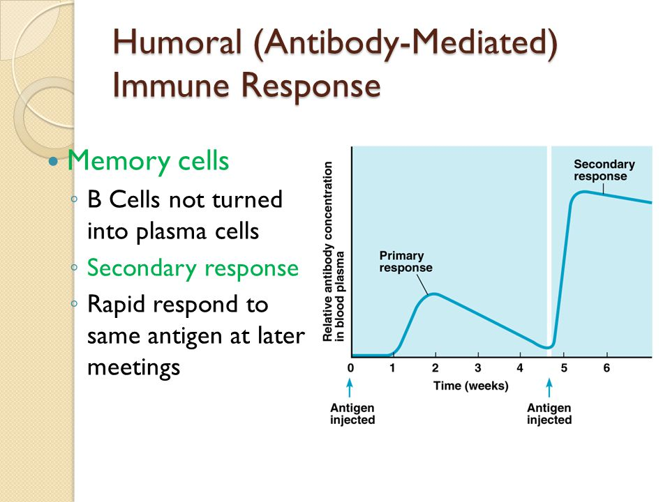 comparing the difference of cell mediated and anti body immune response in mammals Immunity based on antibody see humoral immunity is the development of so-called cell-mediated immune response  passive immunity in domestic mammals comes.