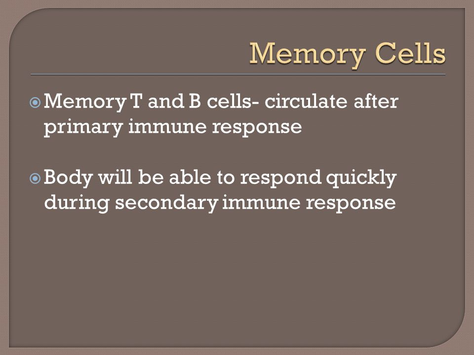 Memory Cells Memory T and B cells- circulate after primary immune response.