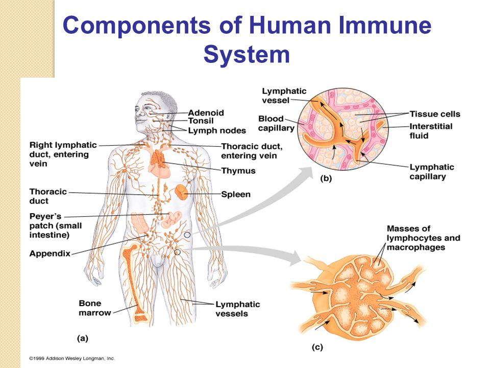 immune system and answer Get expert answers to your immune system questions at sharecare.