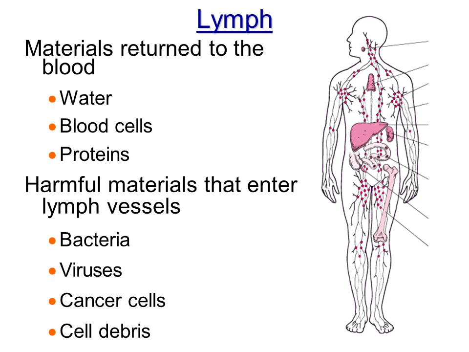 Lymph Materials returned to the blood