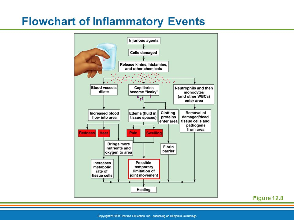 Flowchart of Inflammatory Events