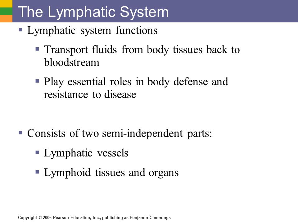The Lymphatic System Lymphatic system functions
