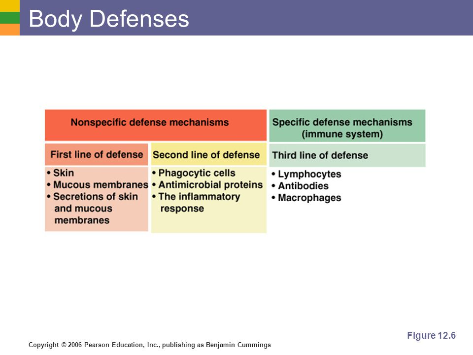 Body Defenses Figure 12.6